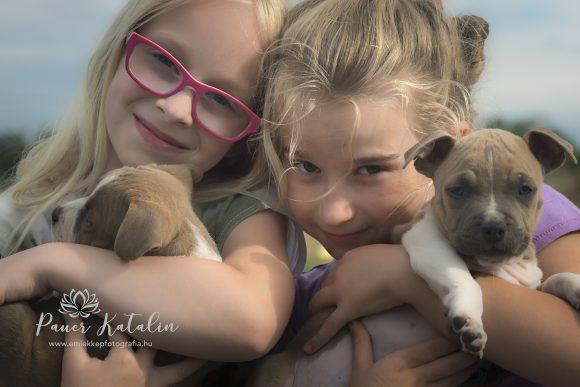 Hűséges barátaink, a kutyák.